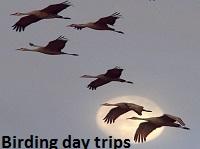 Bird watching day trips Ethiopia