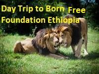 Wildlife safari day Trips from Addis Ababa to the Born Free Foundation Ethiopia